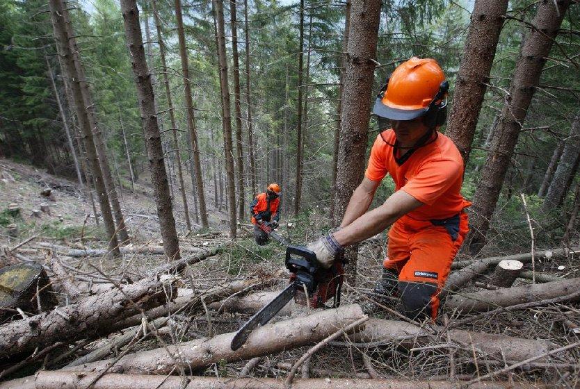 La filiera del legno in toscana tutti i numeri di un for Legno arredamento trova lavoro in toscana