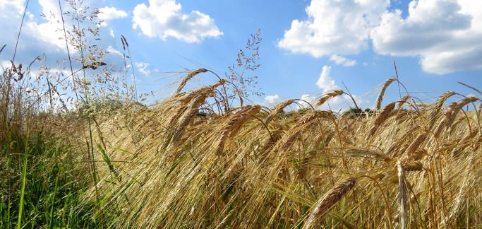 Agricoltura, salgono a 100 milioni le risorse a favore del biologico